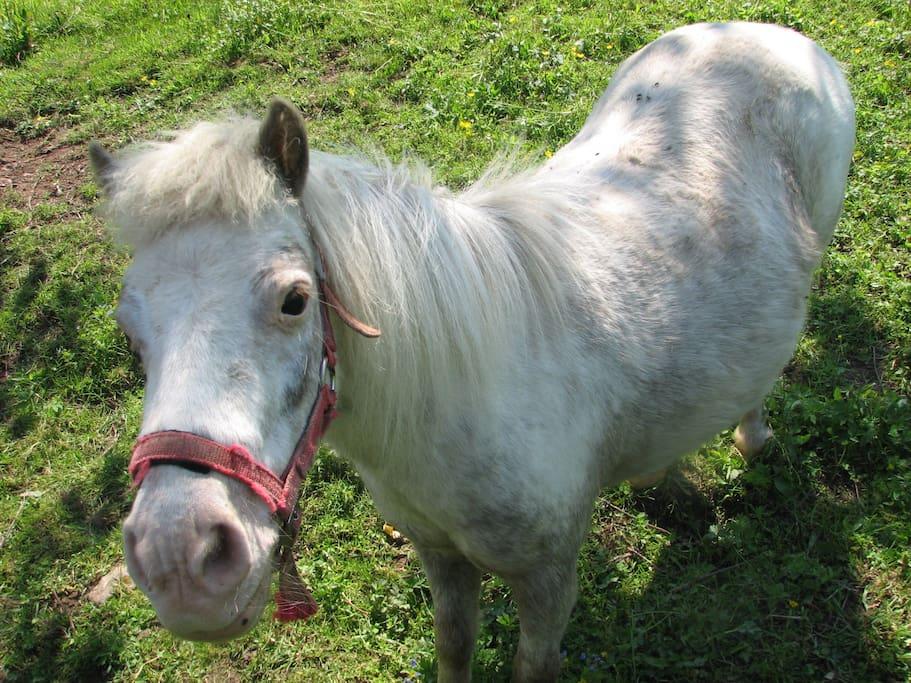 Unser Pony Rosali