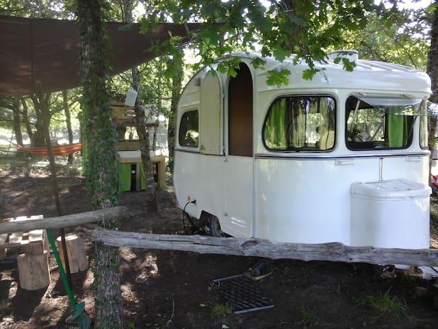 Caravane vintage au coeur de la forêt landaise