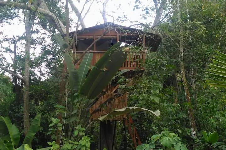 Treegana Hostal : Cabaña del Árbol / Treehouse