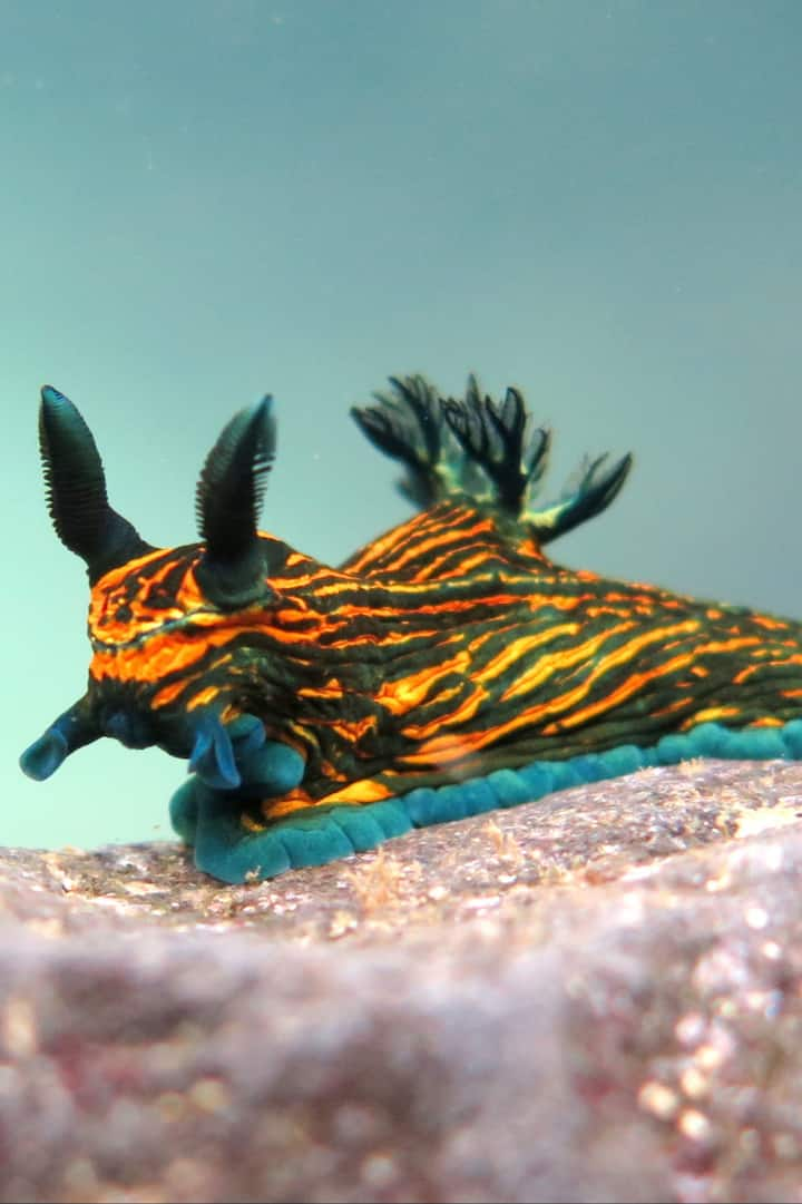 Nudibranch's our favourite