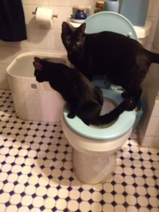 Meet Burzum and Blondie, who only did this once.
