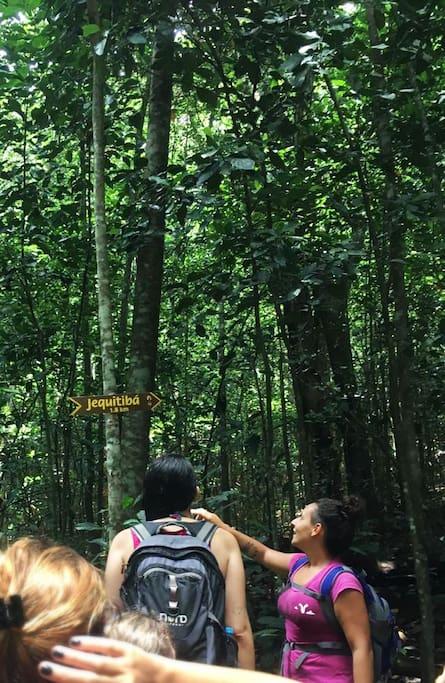 informações sobre a Floresta da Tijuca