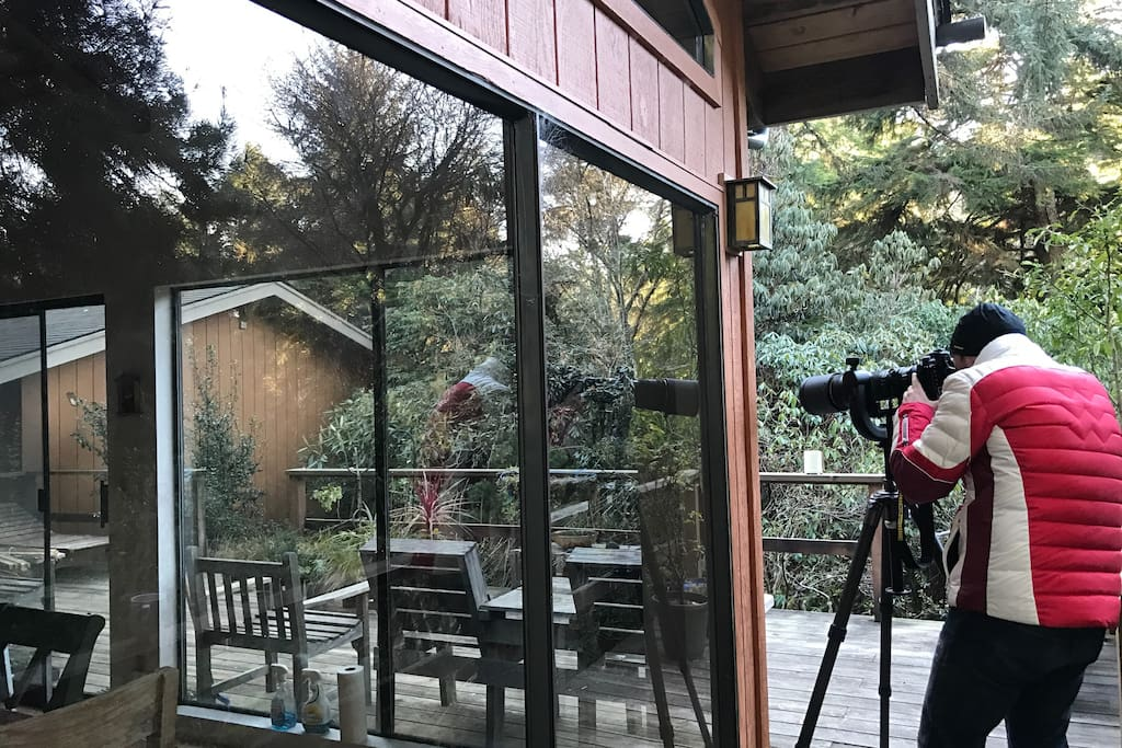 Photography opportunities on the deck for birders