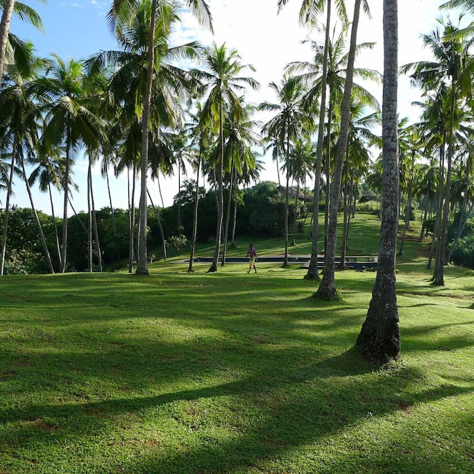 Tropical 2 acre garden overlooking the Indian Ocean