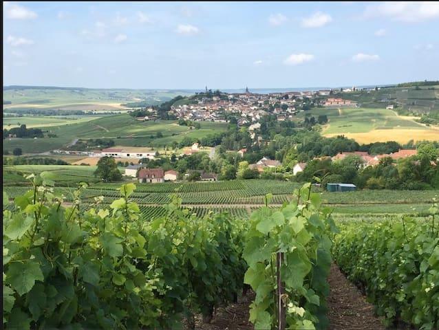 Chatillon Sur Marne et son Vignoble