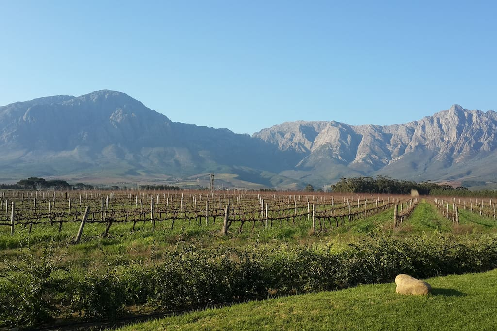 Spectacular mountains behind the vineyards