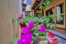 Central Bougainvillea Room # 7