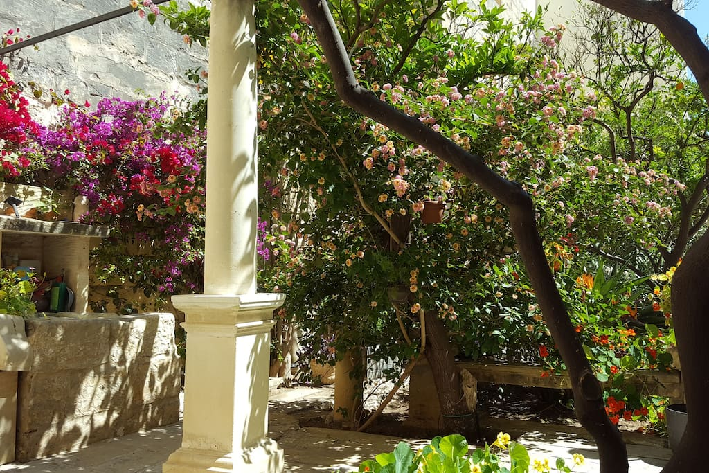 Garden with wells