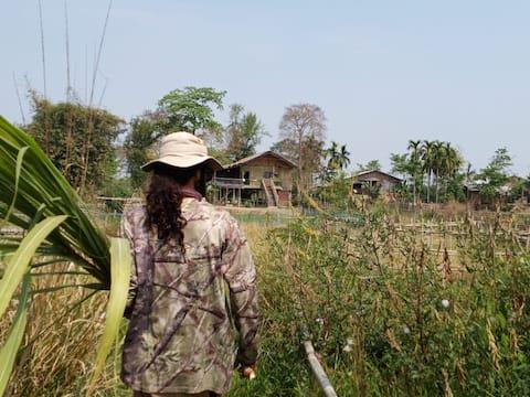 Sol village jungle lodge