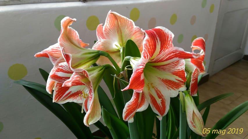 L'Orchidea Reale