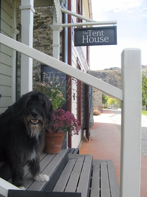 Smudge at my shop in Old Cromwell Town