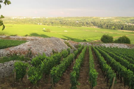 Real Burgundy, off the beaten path - Aluze - Haus