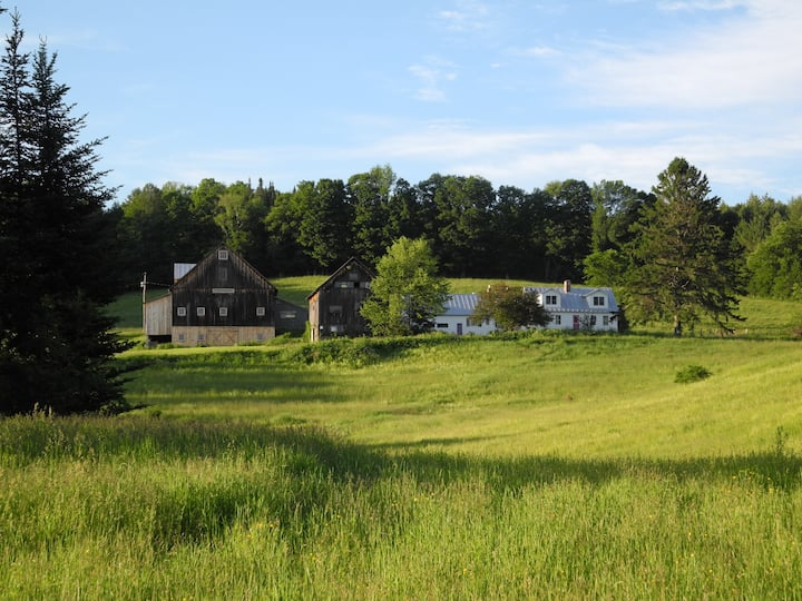 Foster Farm