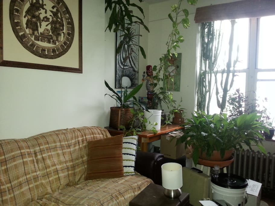 plants and cacti in the living room. It's bright in there and there are lots of objects with stories.