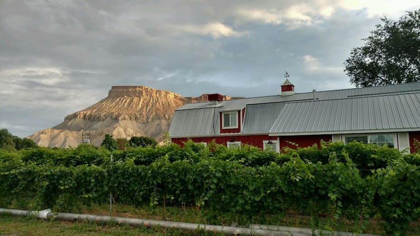 Beautiful Vineyard Barn House - Palisade