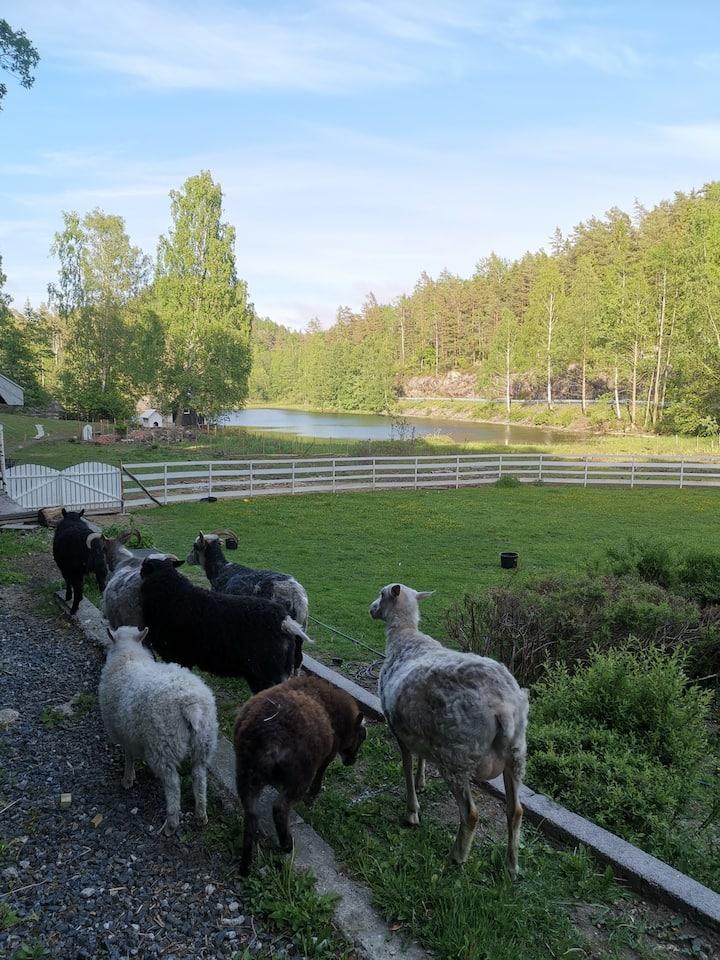 """""""Vangen-Farmen"""", rom for natten, båt, dyr, natur"""