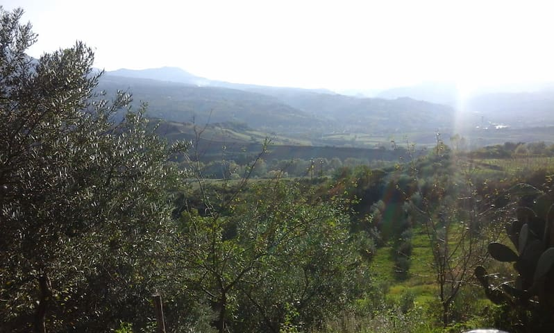 gli ulivi - Viggianello - Hus
