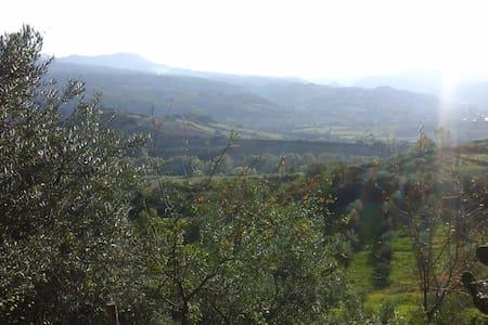gli ulivi - Viggianello - Casa