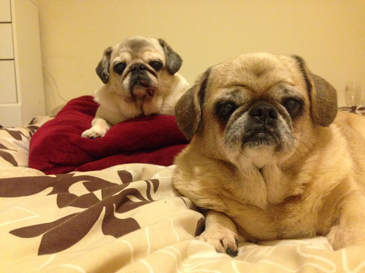 Hellooooooo we are Yoda  and Isabella, we live here also, and look forward to meeting you. We love lots of cuddles and hugs