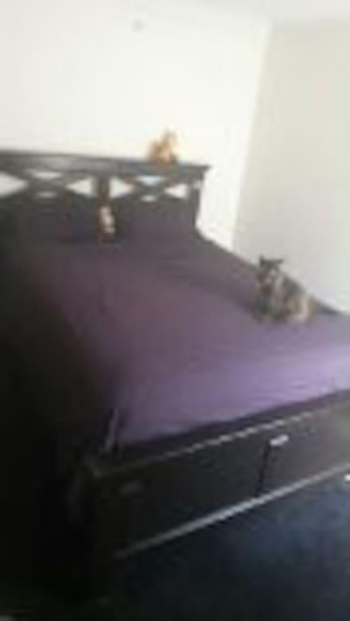 Queen size bed, Cat not included