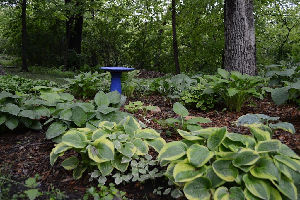 Nestled in regional park; serene back yard