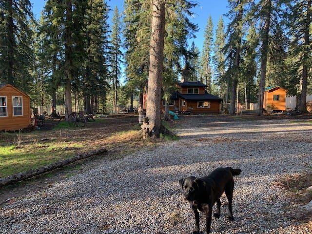 Bear camp sites