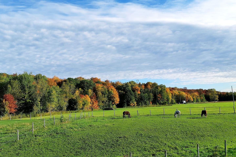 La vue du salon en automne