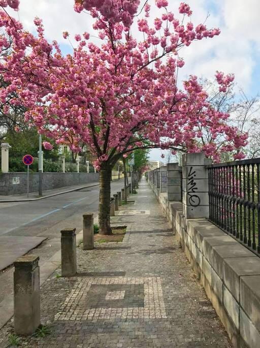 5 min walk to the Wenceslav square (city centre)