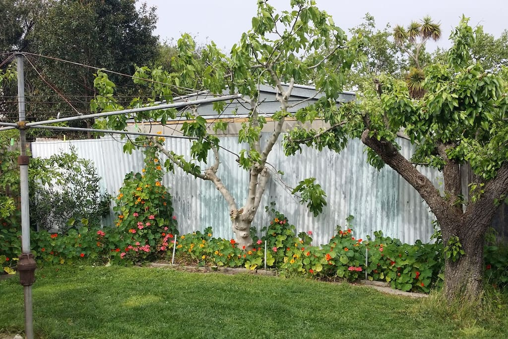 Large backyard with fruit trees and vegie garden.