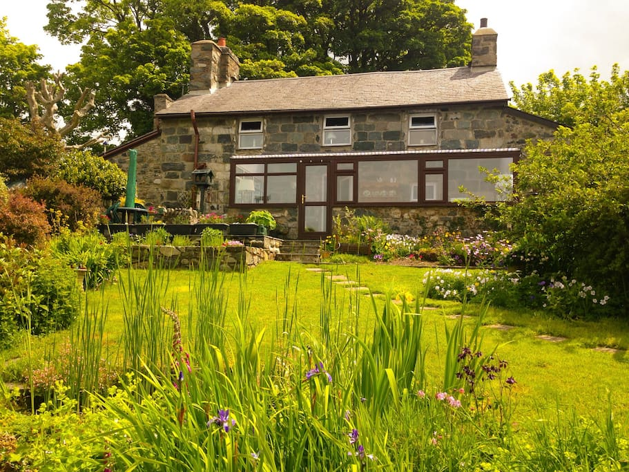 View of Hafod Boeth from the pond (Jun15)