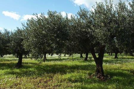 Casa immersa nel verde dei Nebrodi - contrada Badetta/Furiano - Hus