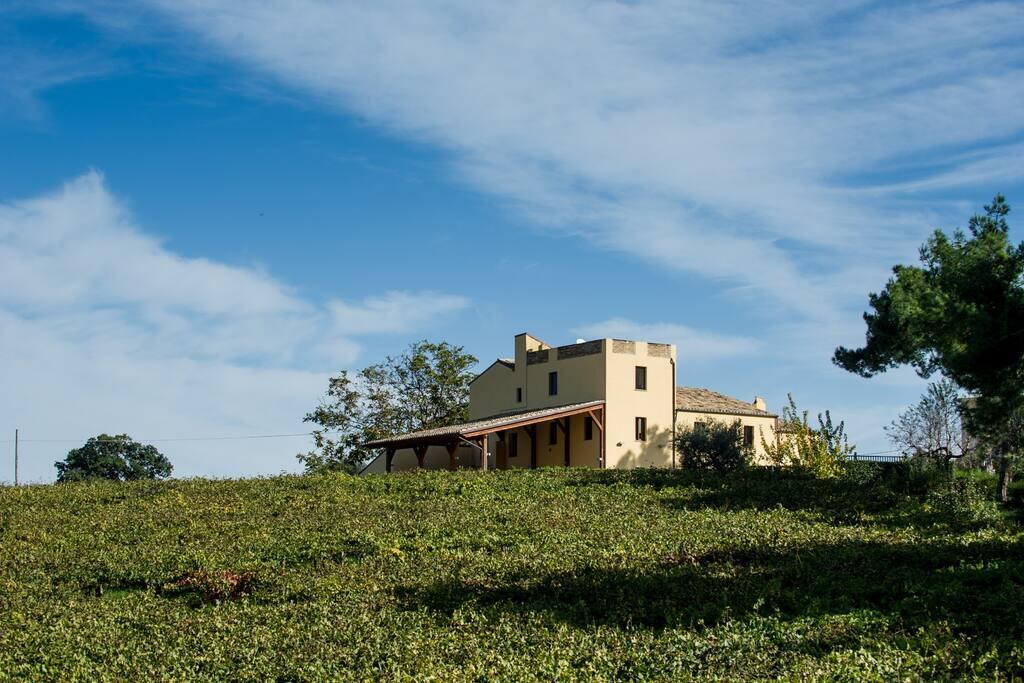 Il casale dell'800 della Famiglia Ciavolich immerso nelle vigne e negli olivi
