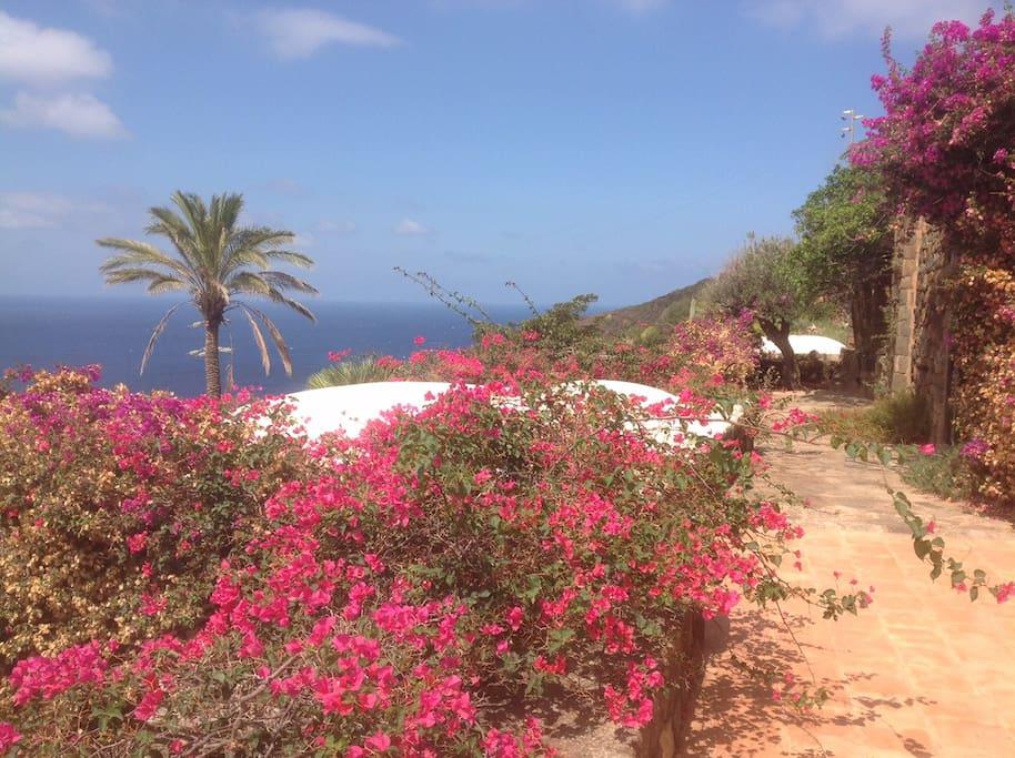 lush mediterranean garden