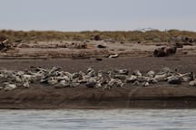 Harbor seals in Taft, just south of us.