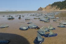 Sometimes the Velella Velellas come visit but usually don't stay long.