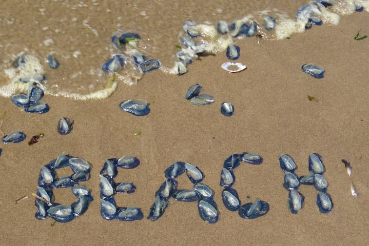 Getting creative on the beach!