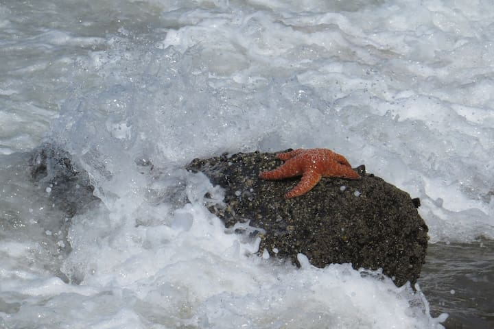 A very healthy sea star on a rock.