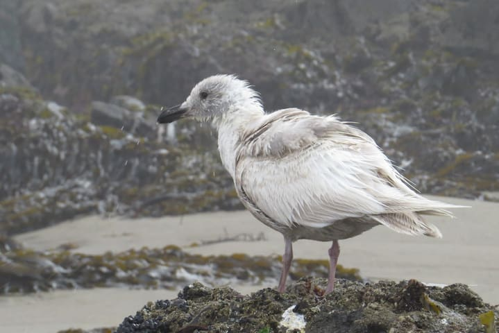 Baby seagull.