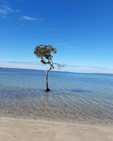 Lonesome mangrove