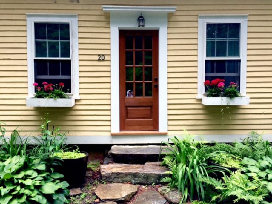 Geraniums fill our window boxes outside the guest room and living room during spring and summer.