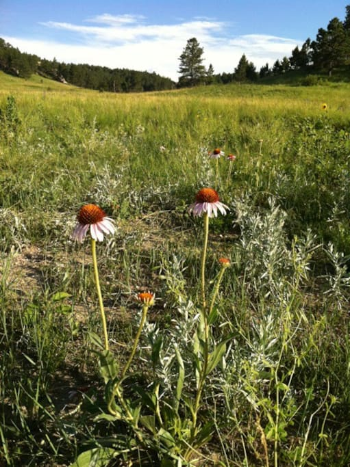 wild medical plants abound