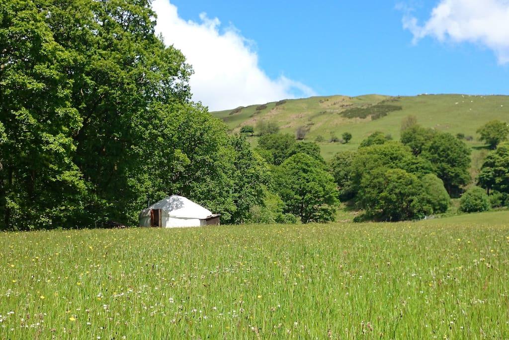 Our 20 foot diameter yurt in the Meadow.