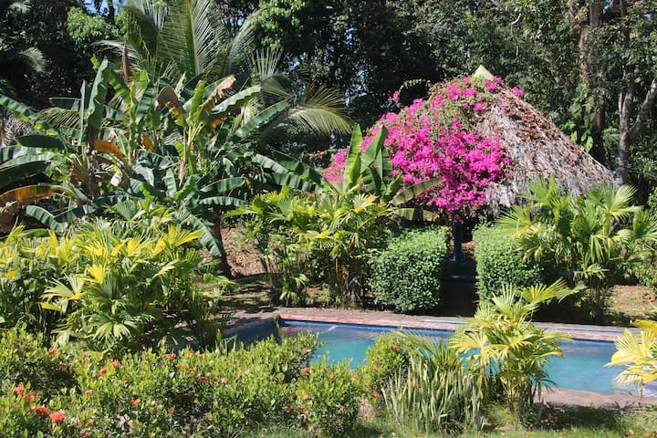 Your own pool and yoga/hammock rancho in our private tropical garden