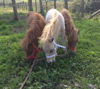 Family ranch & horse riding school - House
