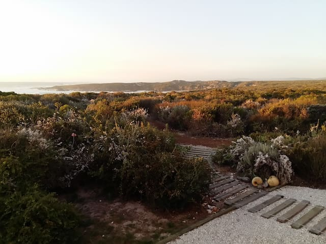 Panoramic view of the ocean and fynbos fauna and flora