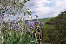 Springtime in Asciano