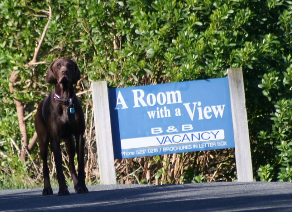 Our GSP Sabi loves to greet our guests
