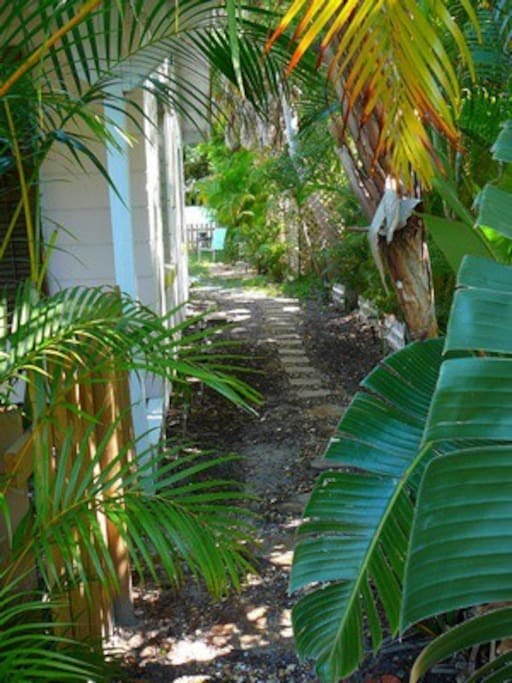 Palm-shaded path to private garden. There's a back porch light and path lights at night.