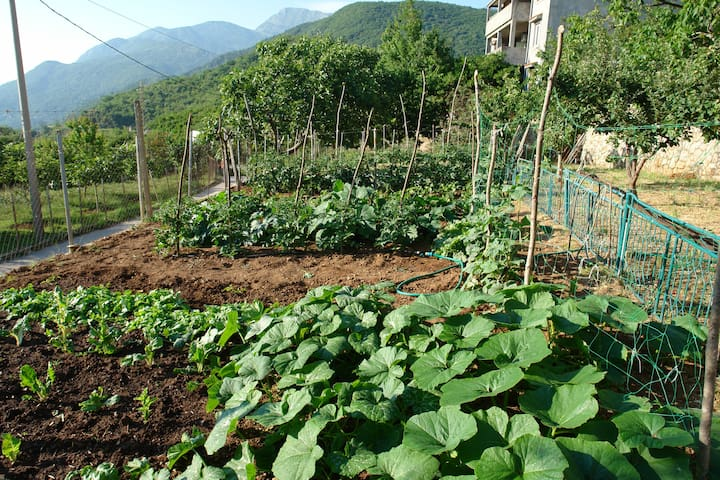 Try organic vegetables from our garden!