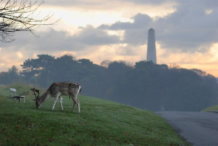 Phoenix PArk - 10 minutes away on foot and perfect for running or walking or cycling